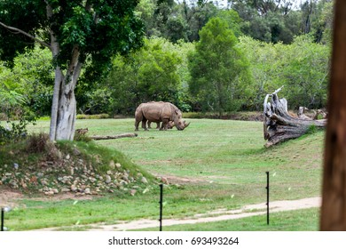 AUSTRALIA ZOO, QUEENSLAND,AUSTRALIA-11th DEC 2016:-the Africa exhibit shows herbivores grazing in the african savanah