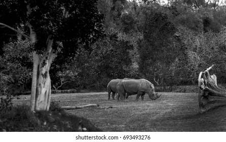 AUSTRALIA ZOO, QUEENSLAND,AUSTRALIA-11th DEC 2016:-the Africa exhibit shows herbivores grazing in the african savanah