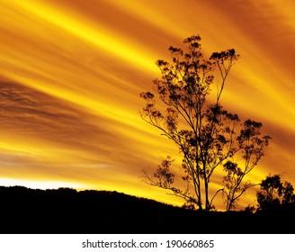 Australian autumn sunset with eucalyptus gum tree silhouette and radiatus clouds