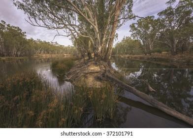 Australian billabong and calm river scene at dawn