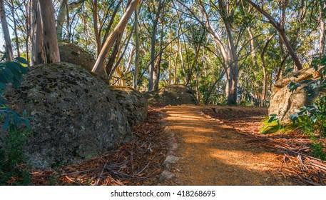 Australian bush walking track