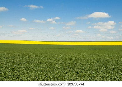 Australian Canola wheat fields