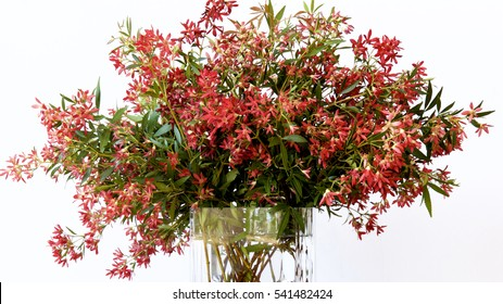 Australian Christmas bush in a vase.