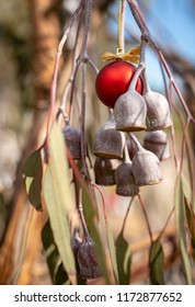 An Australian Christmas, gum tree and gum nuts with a red Christmas bauble, vertical