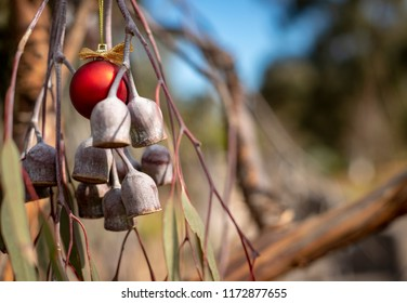 An Australian Christmas, gum tree and gum nuts with a red Christmas bauble, horizontal