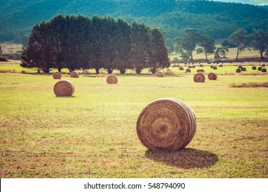 Australian countryside landscape  - round hay bales scattered in a field after harvest