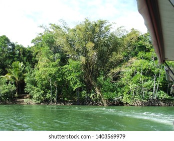 Australian Daintree River and Flora