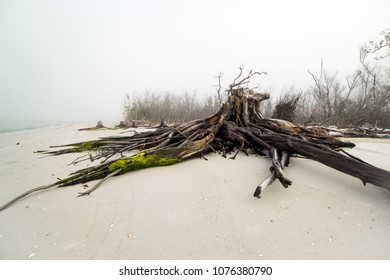 Australian driftwood on the beach, covered in moss on a foggy day