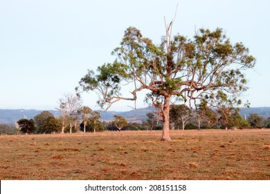 Australian farm paddock background with tree feature