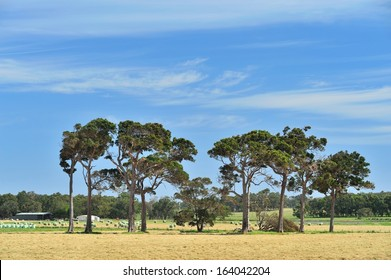 australian farmland with sheds, hay rolls, cattle and scattered gum trees