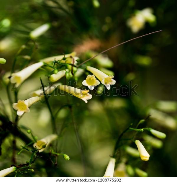 Australian Flora Found Emerald Qld Stock Photo (Edit Now