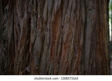 Australian forest waterfalls