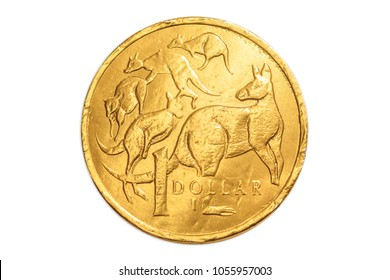 Australian gold chocolate coin of 1 dollar of Australia, AUD currency, close up of the tail side with cangaroos animal icon. Isolated on white studio background.