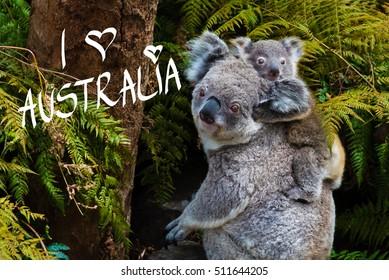 Australian koala bear native animal with baby on the back and I Love Australia text