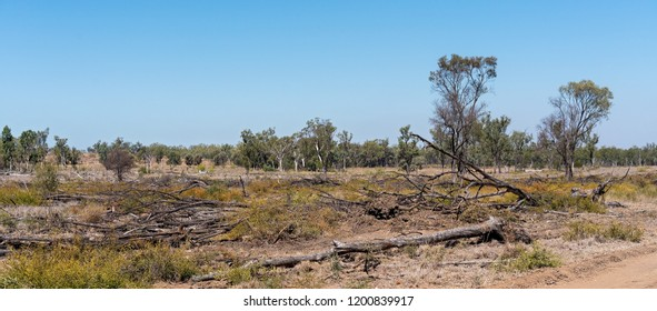 Australian land devastated by deforestation for cattle grazing