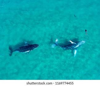 Australian Marine Wildlife