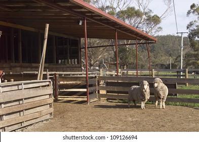 Sheep-pen Images, Stock Photos & Vectors | Shutterstock
