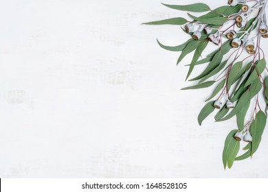 Australian native eucalyptus leaves and gum nuts on a white wooden background photographed from above.