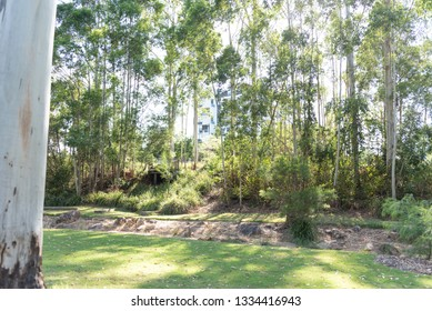 Australian native trees in Parkland in Summer with grassy manicured lawn at Robelle Domain Parklands Springfield, Queensland