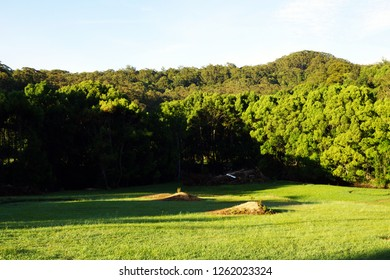 Australian nature meadows and rainforest background