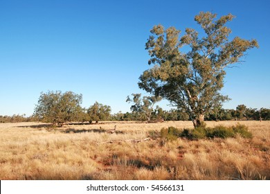 Australian outback landscape with an emu walking through the long dry grass.