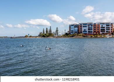 Australian pelicans at Golden Beach, Pelican Waters, Queensland, Australia