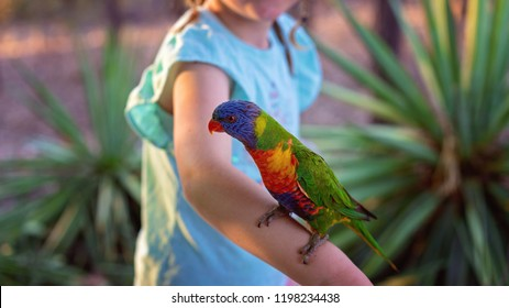 Australian rainbow lorikeet sitting on a child's arm looking for food