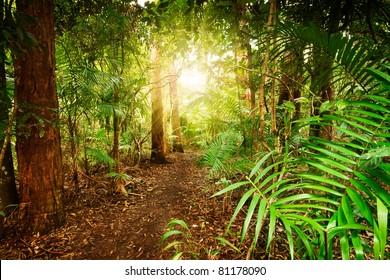 australian rainforest at late afternoon with sun rays breaks through the trees (Tamborine Mountain,Queensland,Australia)