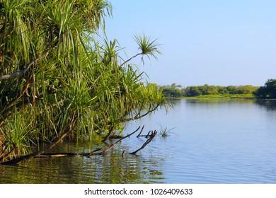 Australian  river with pandanus trees