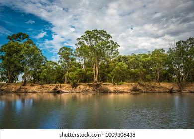 Australian Riverfront Landscape. Eucalyptus trees near  Murrumbidgee River in Hay, New South Wales, Australia