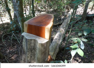 Australian Rosewood Tree that has been cut down exposing the beautiful rich wood grain that has been professionally finished.