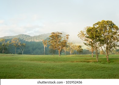 Australian Rural Landscape, typical gum trees in field with the misty hills behind, early morning light.