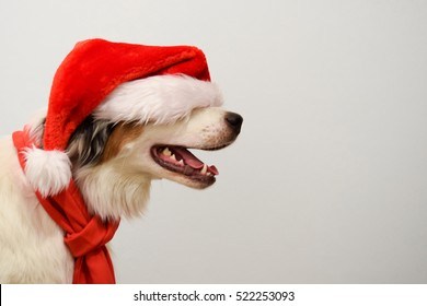Christmas Dog.Christmas Dog Images Stock Photos Vectors Shutterstock