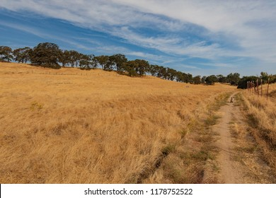 Australian Shepherd sitting on path next to open dry grass field and tree line on cloudy day