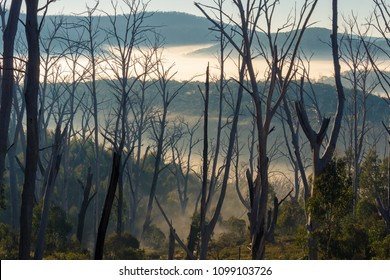 Australian Snowy Mountains Inversion Clouds Sunrise Dead Trees Silhouette Valley