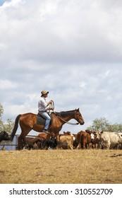 Australian stock man on horse