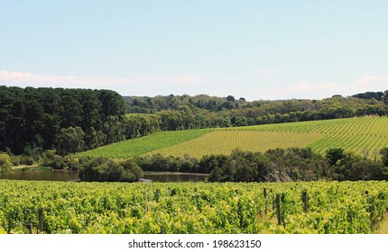 Australian vineyards