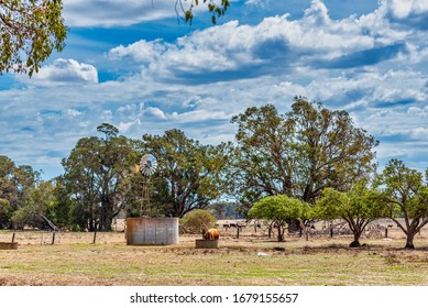 Australian Windmills have successfully pumped water in the Australian Outback into troughs for their stock.