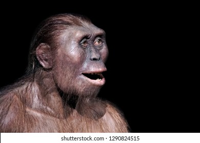 australopithecus afarensis, one of our most ancient ancestors