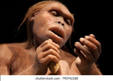 an australopithecus, one of our ancestors