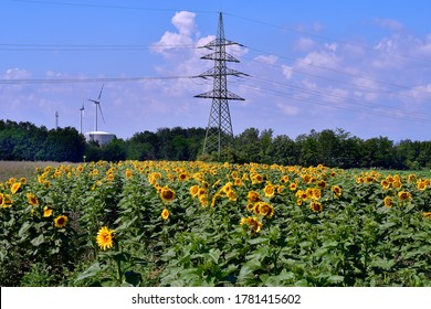 Austria, field with sunflowers and wind turbines in background