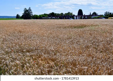 Austria, landscape with ripe wheat field