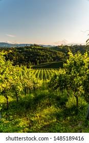 Austria, south styria vineyards travel destination. Tourist spot for vine lovers. Sunset landscape