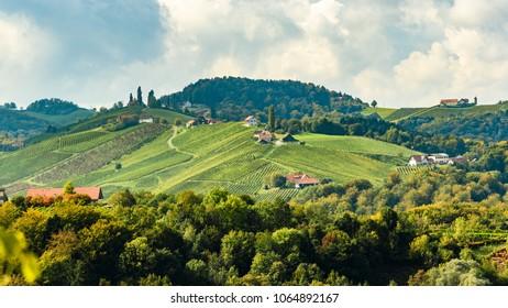 Austria Vineyards Sulztal Leibnitz area south Styria Bad Radkersburg, wine country