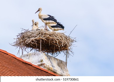 Austrian city Rust situated next to the neusiedler see lake is famous for storks nesting on chimneys of local houses during summer season.