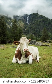 Austrian cow and waterfall under cloudy sky