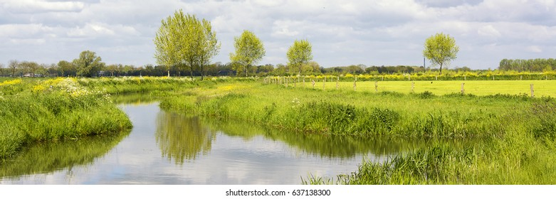 Authentic dutch river panorama landscape with green meadows, primroses, water and clouds