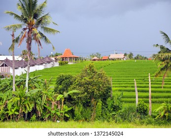 Authentic rice field in Canggu, Bali on an overcast day just a few minutes before heavy rain shower