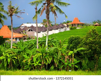Authentic rice field in Canggu, Bali on an overcast day just a few minutes before heavy rain shower. Original Bali houses embedded in the background.
