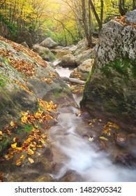 Autmn rill flow. Nature landscape composition.